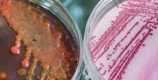 Petri dishes with genetic toxicology specimens