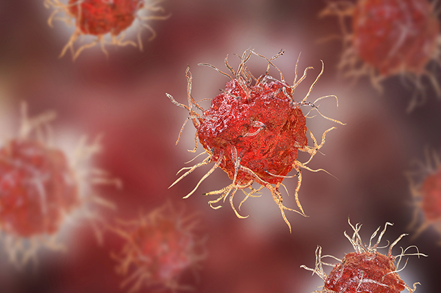 immunology, Dendritic cell, antigen-presenting immune cell