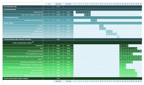 Gantt chart of cell bank production and characterization program
