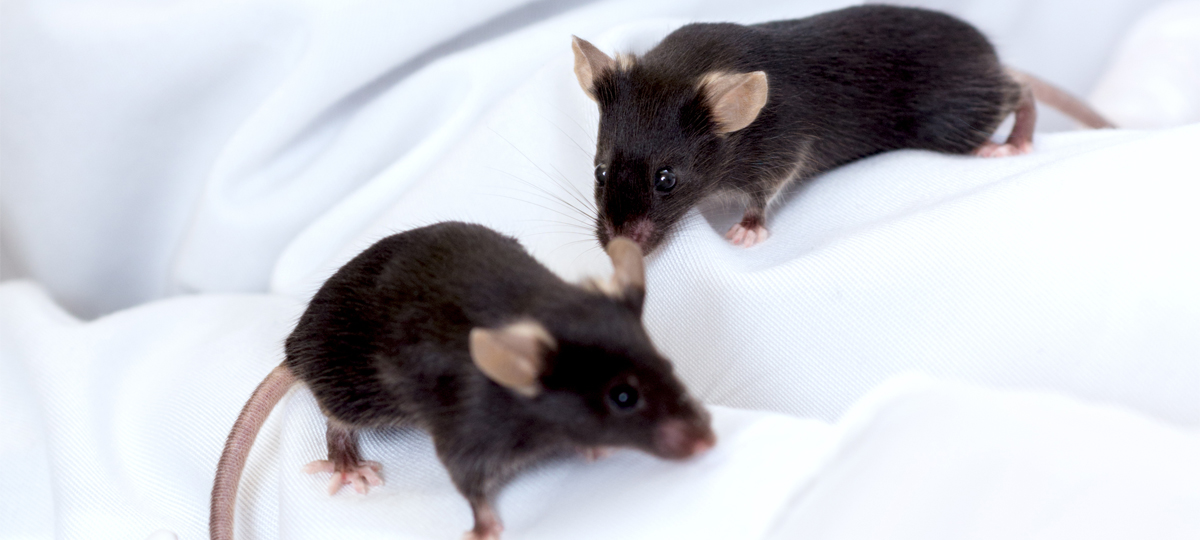 Between 3Rs: Do New Gene Editing Tools Mean Fewer Animals?