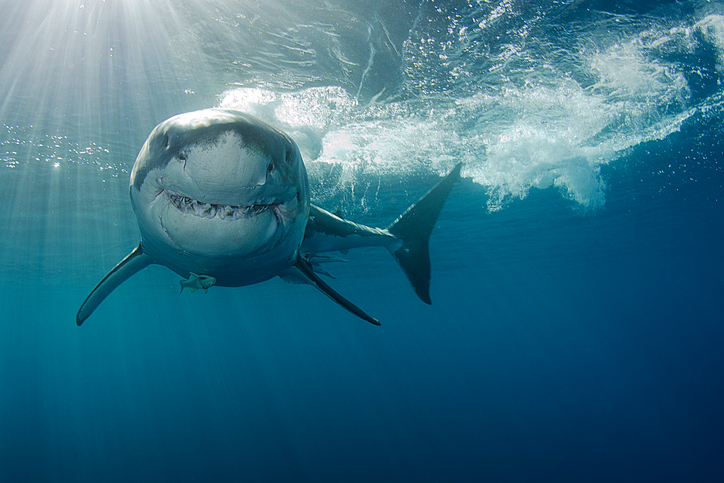 Shark Week, Promising Alzheimer's Updates (Abstract Science: July 23 - 27)