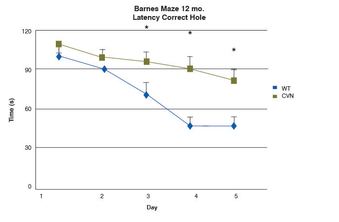 line graph of latency of nose poke to correct hole of 12-month-old CVN and wild-type mice in Barnes maze