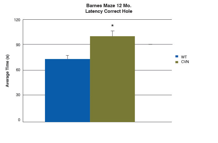 bar graph of latency of nose poke to correct hole of 12-month-old CVN and wild-type mice in Barnes maze