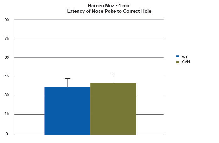 bar graph of latency of nose poke to correct hole of 4-month-old CVN and wild-type mice in Barnes maze