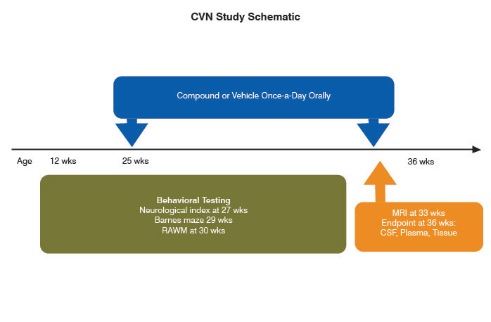 Time based schematic outlining a typical study design using CVN mice in Alzheimer's disease research