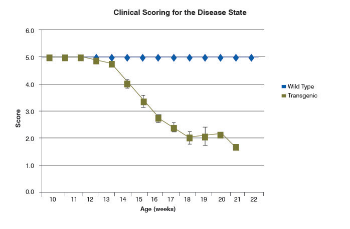 graph of clinical scoring for the disease state in SOD1 and wild-type mice