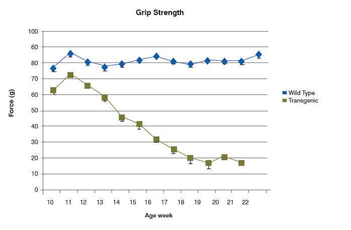 Chart of grip strength in SOD1 and wild-type mice