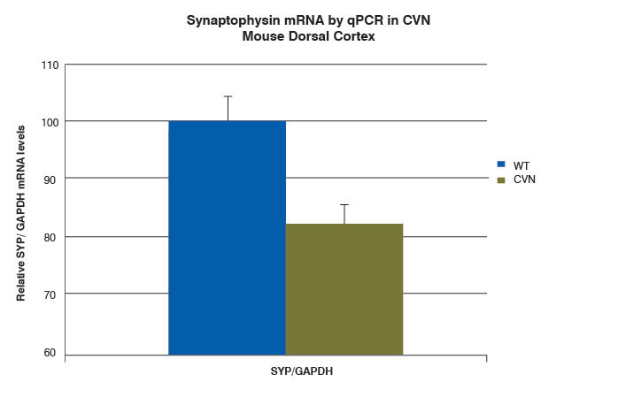 bar graph of synaptophysin mRNA in CVN mouse dorsal cortex