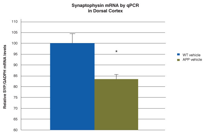 bar graph of synaptophysin mRNA in wild-type mouse dorsal cortex