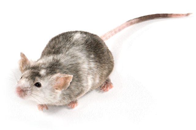 knockout mice made available through genOway collaboration