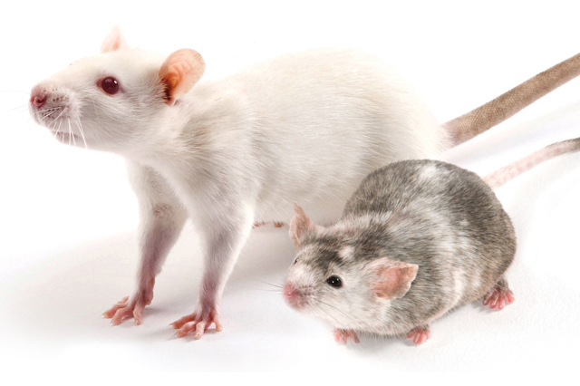 two knockout mouse models