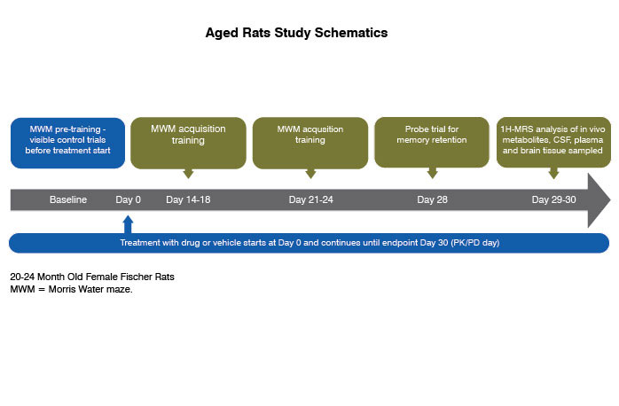 example study paradigm of rat and mice models of aging and cognitive decline
