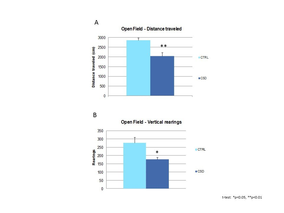 chart of open field distant traveled and vertical rearings in chronic social defeat and control mice