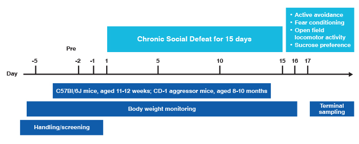 Example of the chronic social defeat study paradigm