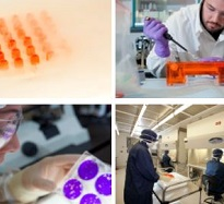 pictures of scientists performing different parts of the cell bank production and storage process