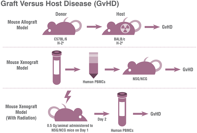 Charles River offers two types of preclinical Graft vs Host Disease model: allogeneic and xenogeneic models.