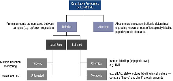 Factors such as sample type and your specific biological question guide our experts' selection of the best approach for your quantitative proteomics experiment.