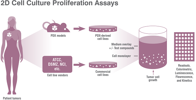 Charles River offers in vitro patient-derived xenograft (PDX) screens using tumor cell lines in a 2D proliferation assay.
