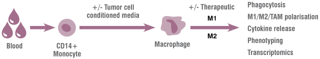 ): Macrophage Cell Based Assays can be used to model the role of myeloid-derived cells in the tumor microenvironment.