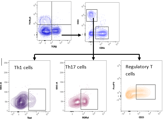 Effects of dextran sulfate sodium (DSS)-induced colitis on tissue in IBD mouse models, visualized by flow cytometry.