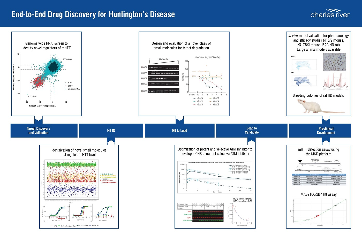 Schematic of End-to-End Drug Discovery Program for Huntington's Disease visualizes the end to end drug discovery capabilities for Huntington's disease highlighting target validation, hit ID, hit-to-lead, lead-to-candidate and preclinical testing of therapeutics.
