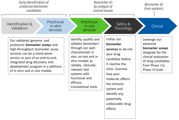 This workflow diagram demonstrates how we can help select predictive biomarker candidates, identify and validate in preclinical species, and translate to clinical patients.