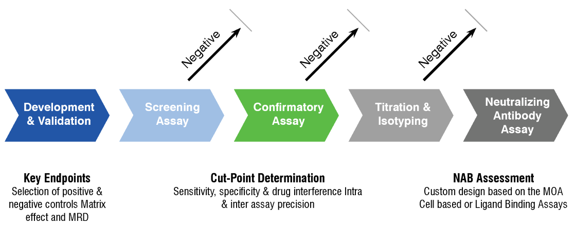 The step-by-step immunogenicity testing cascade.