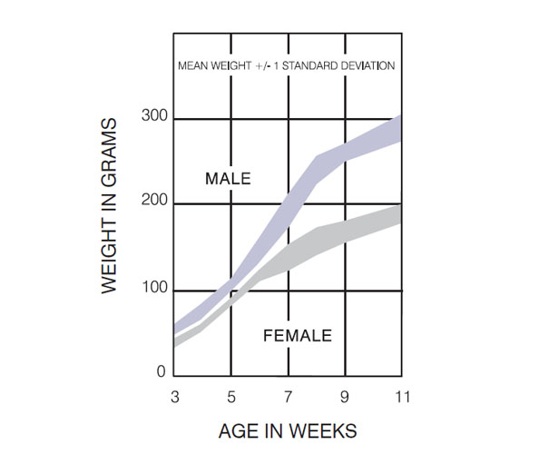 Lewis Rat Germany Growth Chart