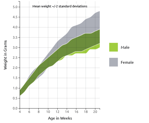 new zealand white rabbit canada growth chart