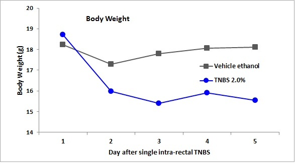 chart of body weight loss in 2% TNBS-treated mice compared with vehicle ethanol-treated mice