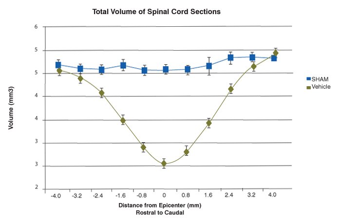 total volume of spinal cord sections