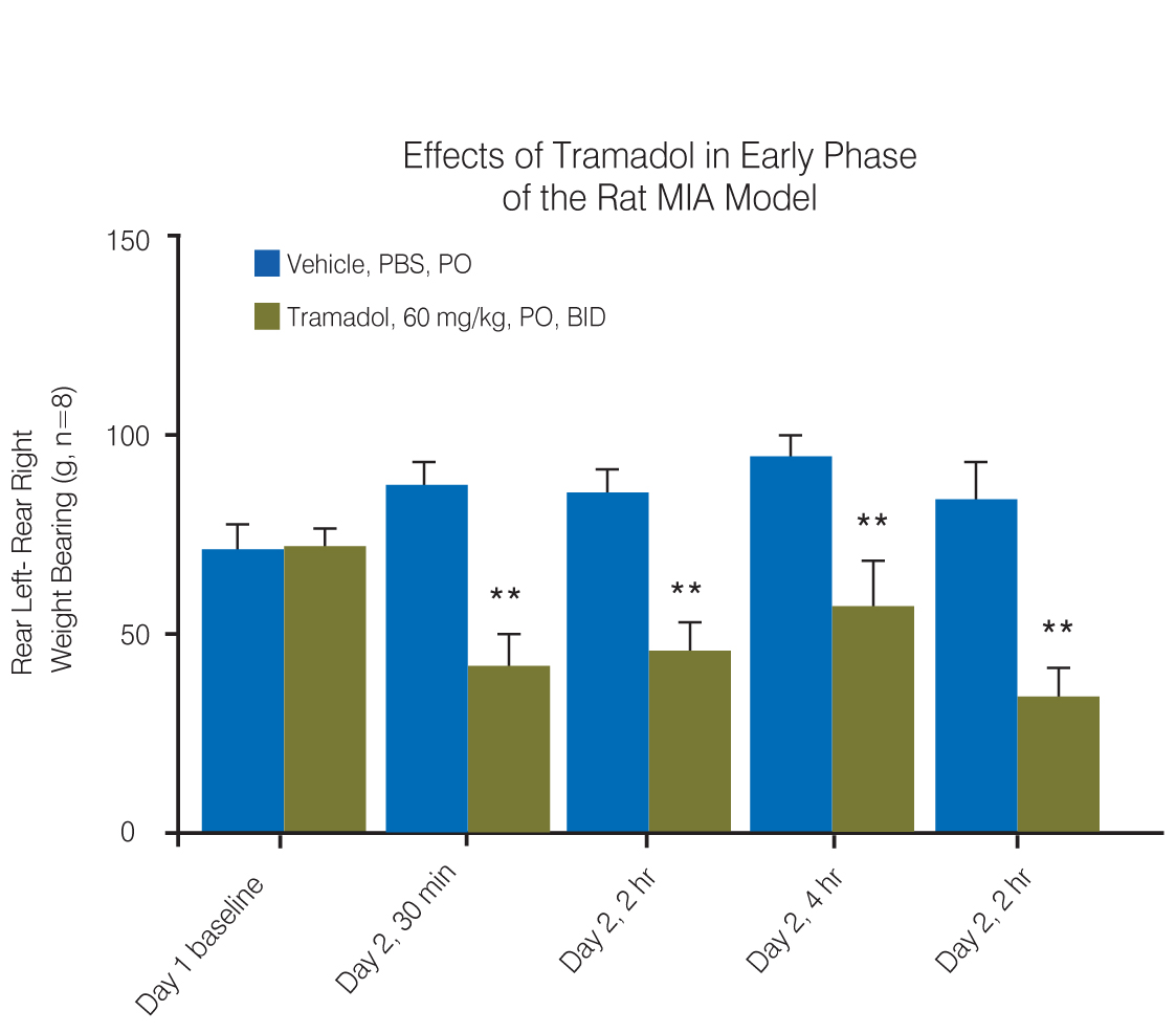 Effects of Tramadol in Early Phase of the Rat MIA Model