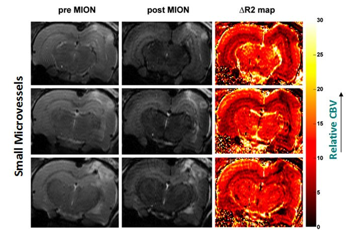 imaging of traumatic brain injury model