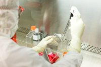 mammalian cell bank preparation by a laboratory technician