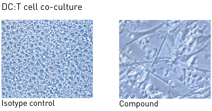 T cell co-culture of isotype control and compound