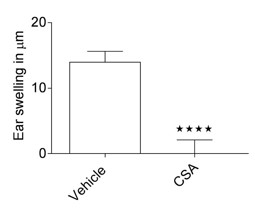 Graph showing ear swelling in 2,4,6-trinitrochlorobenzene (TNCB)-induced allergic contact dermatitis model. Graph shows ear swelling data as the difference between the challenged and control ear thickness measurements; the graph shows efficacy of Cyclosporin A (CSA) compared to the vehicle.
