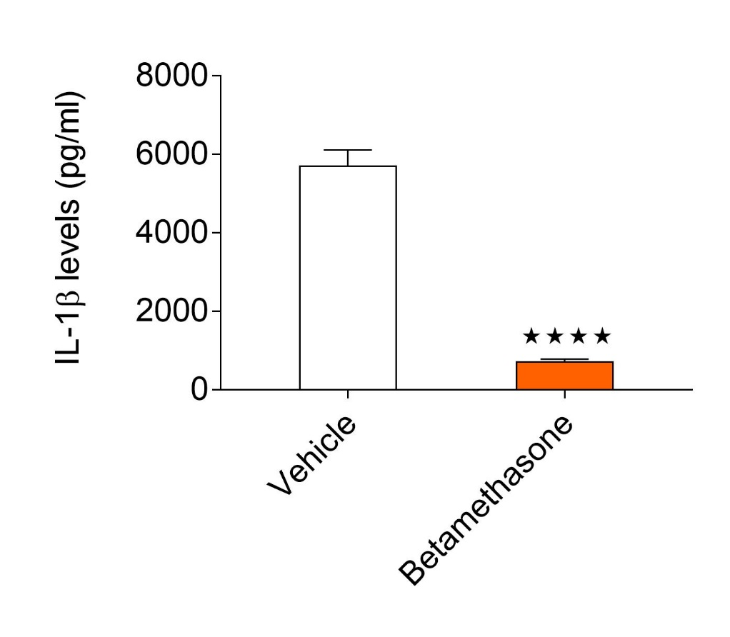 Graph showing cytokine cytokine levels ear homogenates in oxazolone-induced allergic contact dermatitis model. The data shows reduced levels of IL-1β in the Betamethasone group when compared to the vehicle.