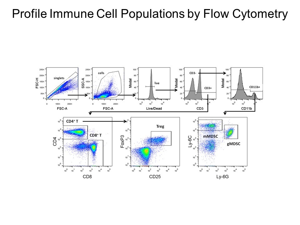 profile immune cell populations by flow cytometry