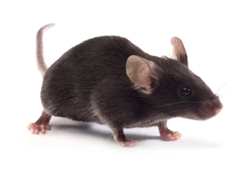 Germ-free mouse models are available for microbiome research