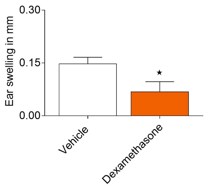 Ear Swelling in Capsaicin induced irritant contact dermatitis model. Graph showing ear swelling presented as the difference between the challenged and control ear thickness measurements in the capsaicin irritant contact dermatitis model. The graph shows efficacy of dexamethasone compared to the vehicle at 24hrs post challenge