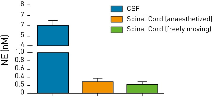 Bar graph showing levels of norepinephrine in the cerebrospinal fluid and spinal cord of either immobilized or freely moving animals.