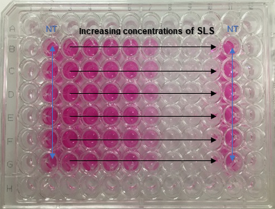 Example of a 96-well plate of a positive control (sodium dodecyl sulfate) used in the Neutral Red Uptake assay (NRU).