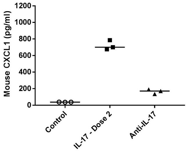 Graph showing IL17 antibody blocks serum CXCL1 production in IL17 challenged mice.