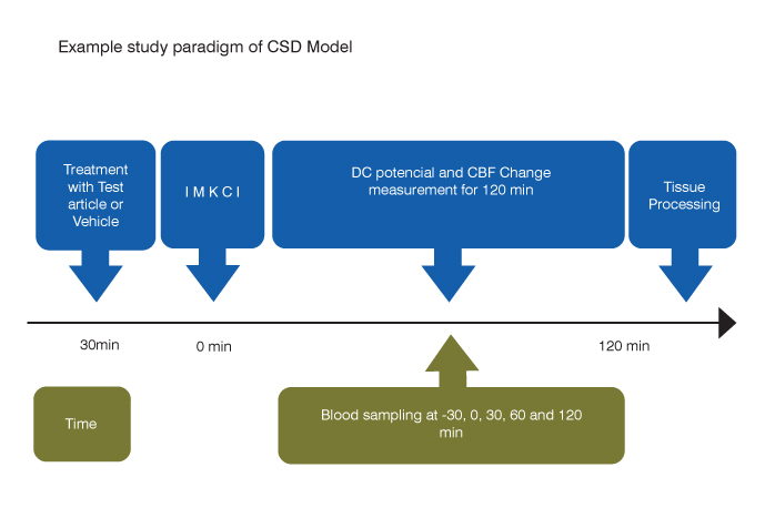 example study paradigm of CSD model