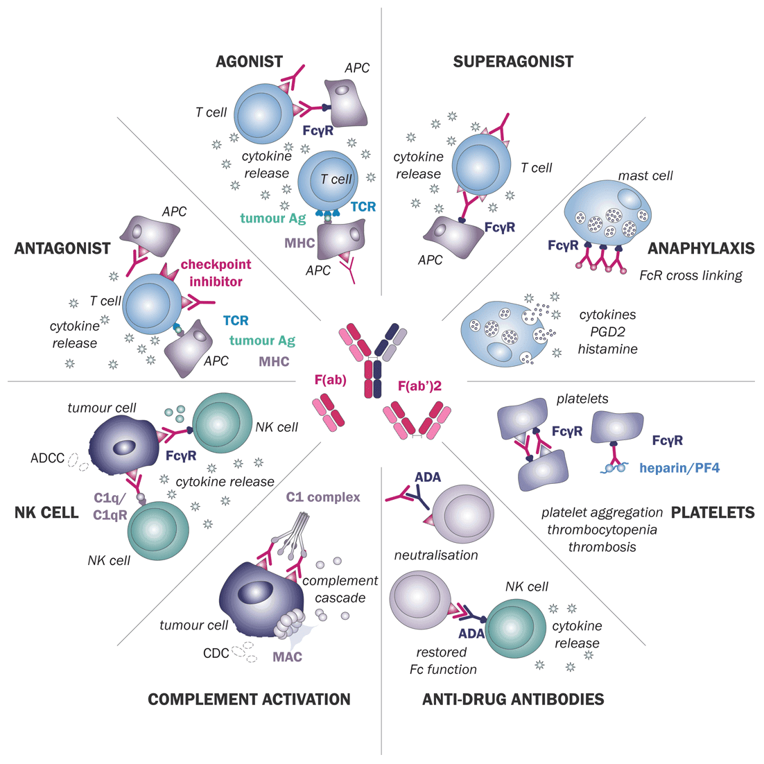 diagram illustrating the possible adverse drug interactions with immune cells