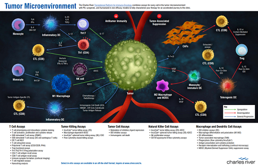 Tumour Microenvironment graphic