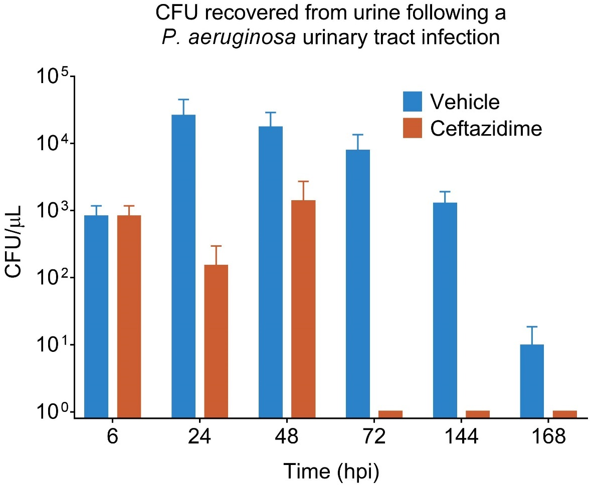 CFU recovered from urine following a P. aeruginosa urinary tract infection