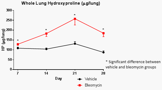 chart of whole lung hydroxyproline in control and bleomycin-induced mice