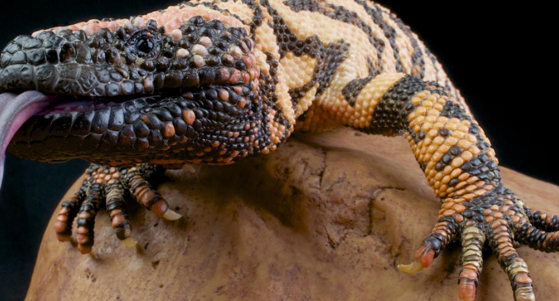 Snake and Spider Venom Also Help Save Lives