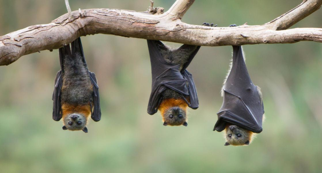 The Socially-Aware Bat (Abstract Science: June 15-21)